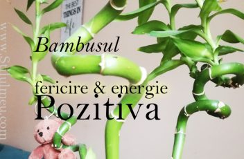 Bambusul aduce pace si energie pozitiva in casa