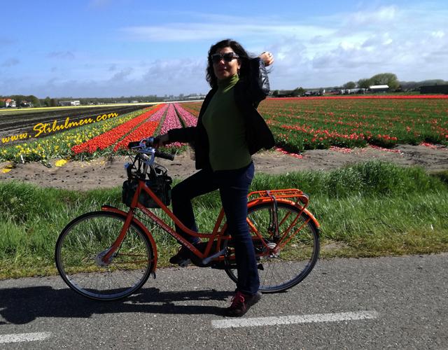Cele mai frumoase lalele din lume vazute de pe bicicleta la Keukenhof