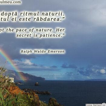Adopta ritmul naturii. Secretul ei este rabdarea